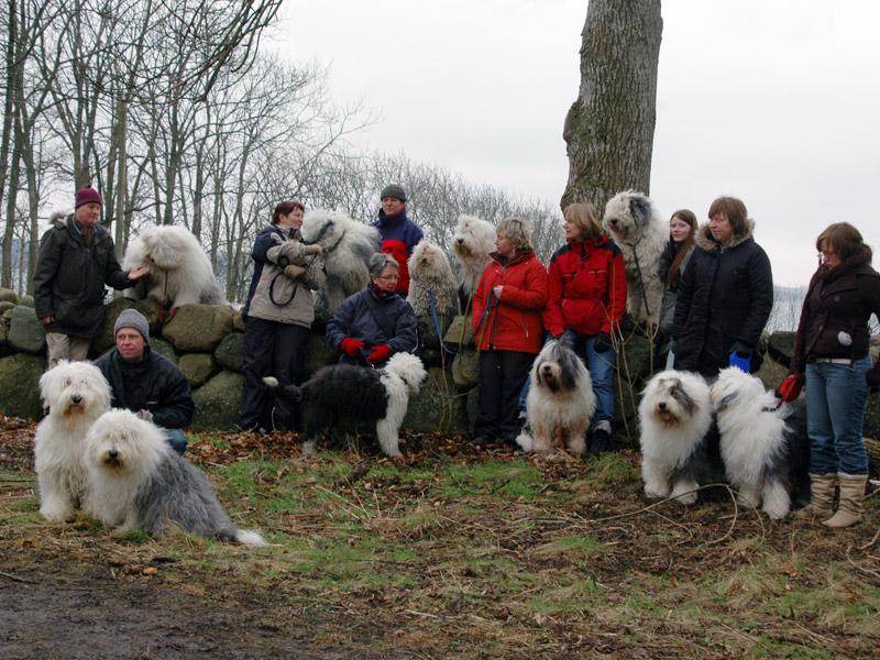 13 Old English Sheepdog samlet til Solkystens første treff