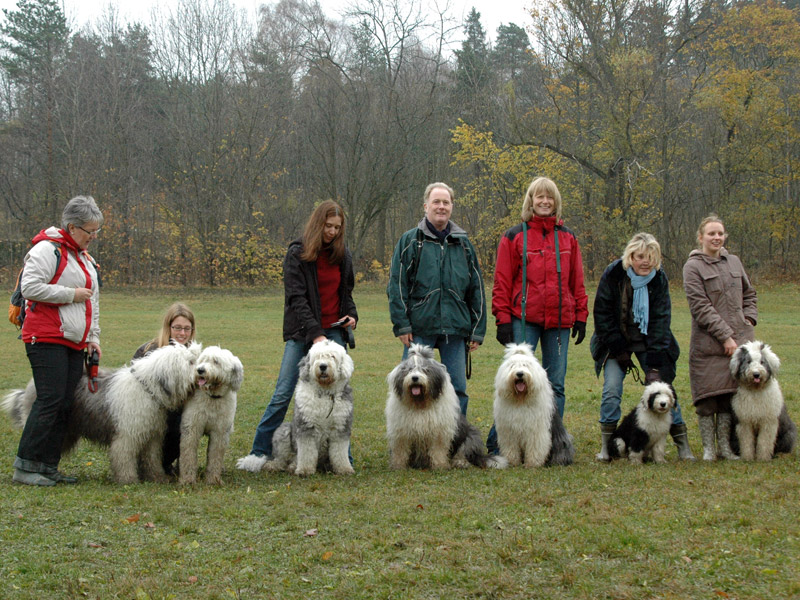 7 Old English Sheepdog samlet på Ekeberg