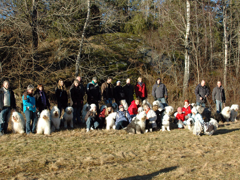 23 Old English Sheepdogs samlet til treff.