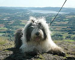 Bobsi nyter den flotte panoramautsikten på toppen av Eggekollen.