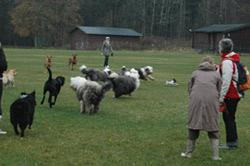 Full fart på sletta blandt nye hundevenner.