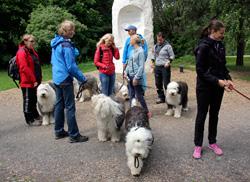 Sheepdog og kultur i Ekebergparken.