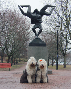 Old English Sheepdog treff i Frognerparken.