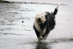 En glad OES på stranden.