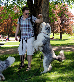 Triks i parken.