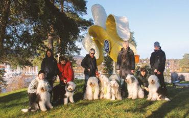 Old English Sheepdog treff på Høvik