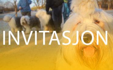 Invitasjon til hundetreff med Old English Sheepdogs
