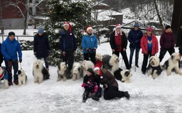 Sheepdog tur Bærums Verk