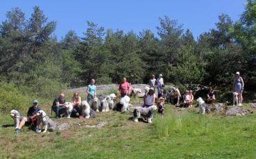Hundetreff på Ekeberg