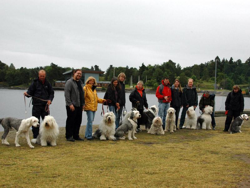 10 Old English Sheepdog samlet til treff på Kalvøya