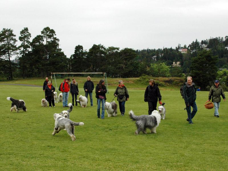Flott tur med glade hunder.