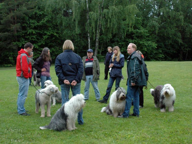 Sosialt samvær og deling av sheepdog erfaringer