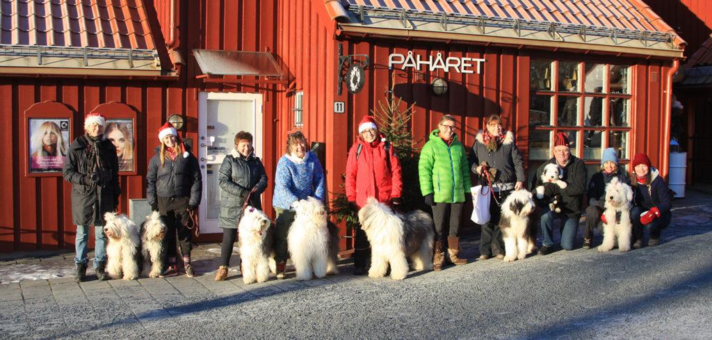 Solkysten Old English Sheeepdog på Bærums Verk