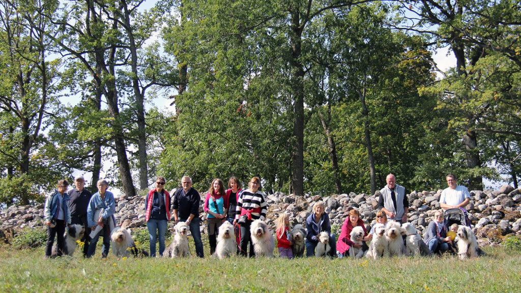 Old English Sheepdog treff i Borreparken